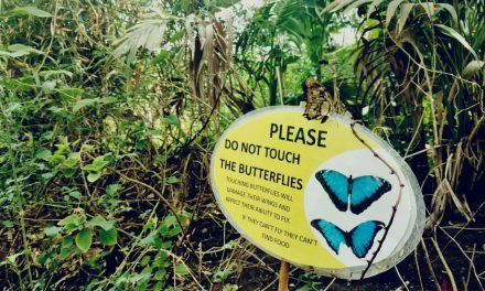 Stratford Upon Avon Butterfly Farm – A Monarchical Experience