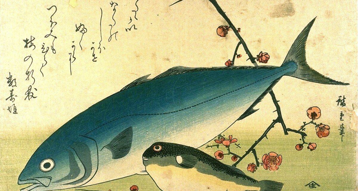 Japanese Blowfish – A Poisonous Paper